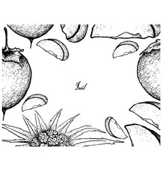 Hand drawn of kaki or japanese persimmon on white vector
