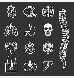 Human internal organs detailed icons set vector image