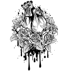 Human heart with roses vector