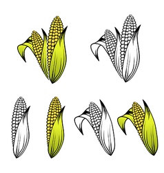 Corn Collection vector image vector image