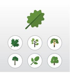 Flat icon natural set of alder decoration tree vector