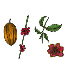 hand drawn cocoa beans set in color vector image vector image