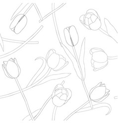 tulip on white background vector image vector image