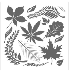 Leaf collection - set vector image