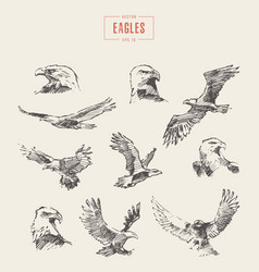 set realistic eagles hand drawn sketch vector image vector image