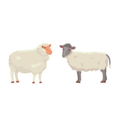 set cute sheep and ram isolated retro vector image