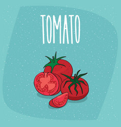 Isolated ripe fruit tomato vegetable whole and cut vector