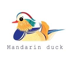 Mandarin duck vector