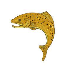 brown trout jumping drawing vector image vector image