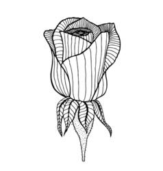 Rose sketch vector