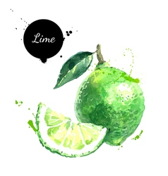 Watercolor hand drawn lime isolated eco natural vector