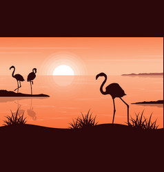 Beauty landscape of flamingo at sunset silhouettes vector