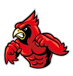 cardinal bird mascot show his muscle vector image
