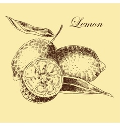 lemon citrus hand drawn sketch in ink and vector image vector image
