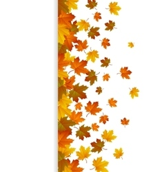 Card with maple autumn leaves and space for text vector