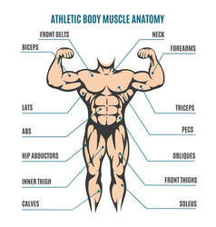 Athletic body man figure muscular anatomy vector