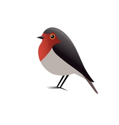 Robin bird clipart vector