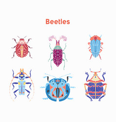 Set drawn beautiful beetles vector