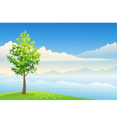 Summer tree background vector image