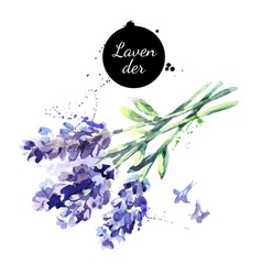 Watercolor hand drawn bunch of lavender flowers vector
