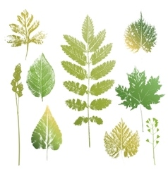 Collection of leaves and grass imprints vector