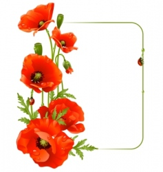 Red poppy frame vector