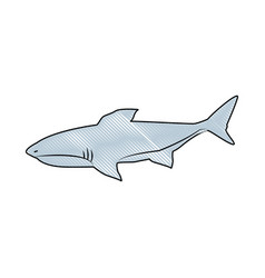 shark marine wild life nature animal vector image vector image