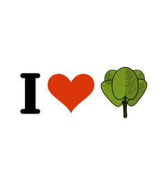 I love spinach heart and green leaf lettuce fresh vector