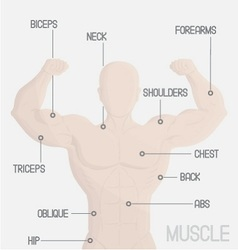 Male part muscle gym vector