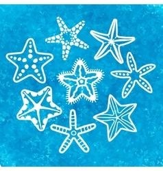 Collection of various sea starfish vector