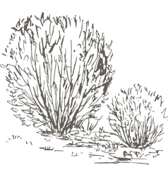 Willow bushes with leaves and grass vector