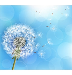Flower dandelion on light blue background vector image