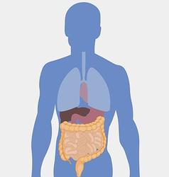 Human intestines detailed medical vector