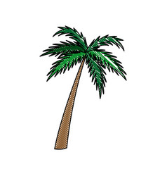 Palm tree natural tropical botanical vector