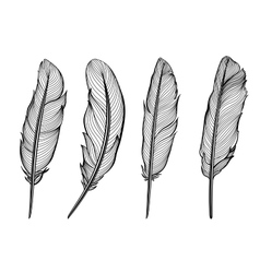 Set of isolated feathers vector image