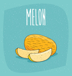 Isolated ripe melon fruit and cut pieces vector