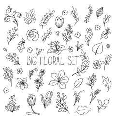 Flowers berries and leaves collection floral vector