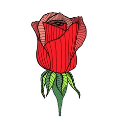 drawing of rose vector image