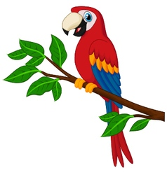 Cartoon red parrot on a branch vector