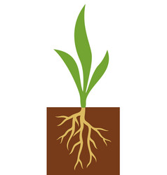 plant with roots vector image