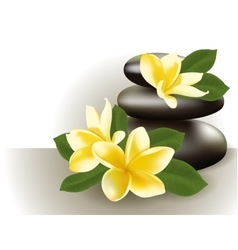 Spa still life with frangipani flower vector