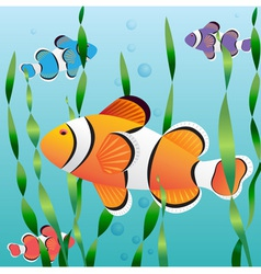 Realistic exotic colorful fish in aquarium vector