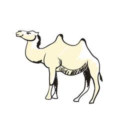 arabian camel hand drawn icon vector image vector image
