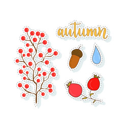 Autumn stickers set with berries and acorn vector