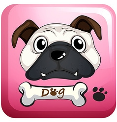 Little pug on square badge vector