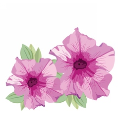 Pink summer flowers isolated on white vector