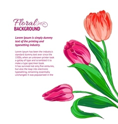 Red tulips and sample text vector