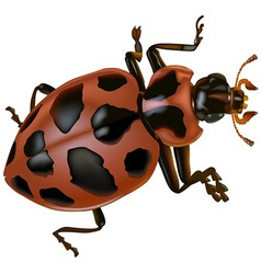 Spotted lady beetle vector