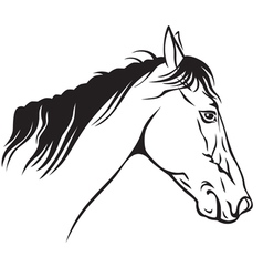 horse profile vector image vector image