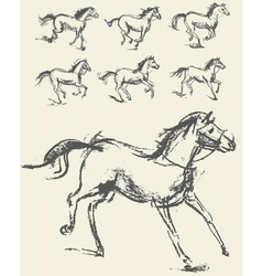 Horse Set Hand-drawn Phase of the movement vector image